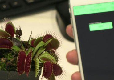 """Combinar tecnología y naturaleza para crear """"robots-plantas"""""""