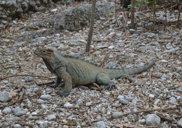CEMEX recibe recertificación por proyecto de conservación de la biodiversidad