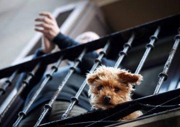 Las mascotas ayudan a los alemanes a sobrellevar la pandemia
