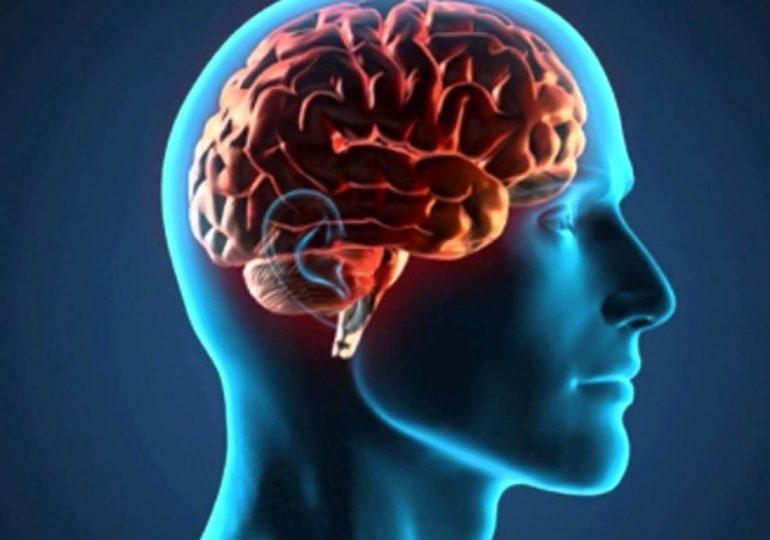 El cerebro humano moderno apareció hace menos tiempo de lo que se pensaba, según un estudio
