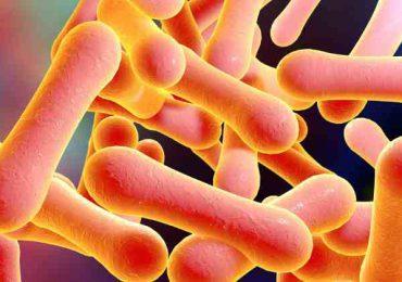 Difteria, enfermedad infecciosa aguda epidémica que se puede prevenir