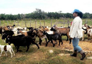 Cuba autoriza sacrificar ganado para vender carne, antes era castigado con cárcel