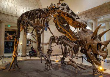 ¿Pueden los museos vender sus tesoros? La pandemia reaviva el debate