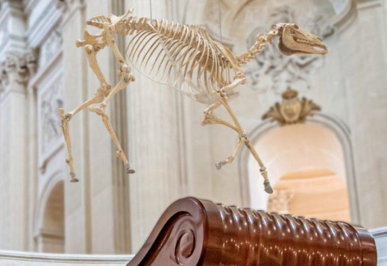 Polémica en Francia por esqueleto del caballo de Napoleón sobre su tumba