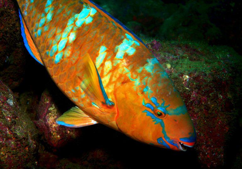 Poder Ejecutivo pone en veda captura de 13 especies