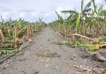 VIDEO   Agricultura apoyará a productores afectados por granizada en el Cibao con financiamientos a tasa cero