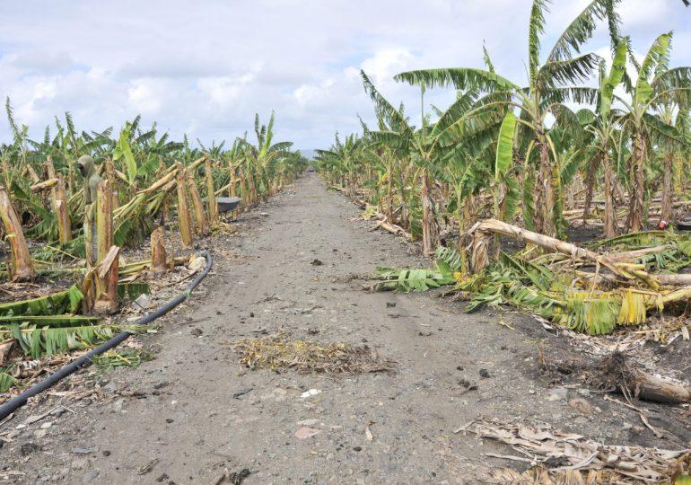 VIDEO | Agricultura apoyará a productores afectados por granizada en el Cibao con financiamientos a tasa cero