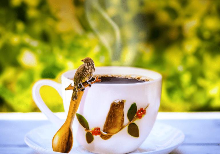 Café Mamá Candín lanza colección inspiradas en las aves endémicas dominicanas