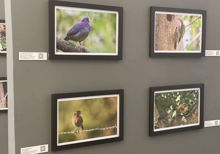 """""""Endémicas: Las Américas, Las Antillas y La Española"""" una muestra fotográfica sobre aves migratorias de la región"""