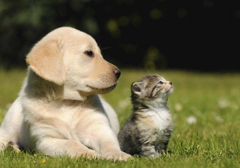 Cuánto cuesta tener un perro o un gato al año