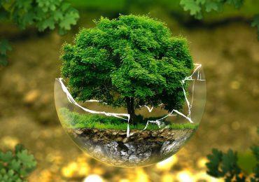 Hoy se conmemora el Día Mundial del Medio Ambiente