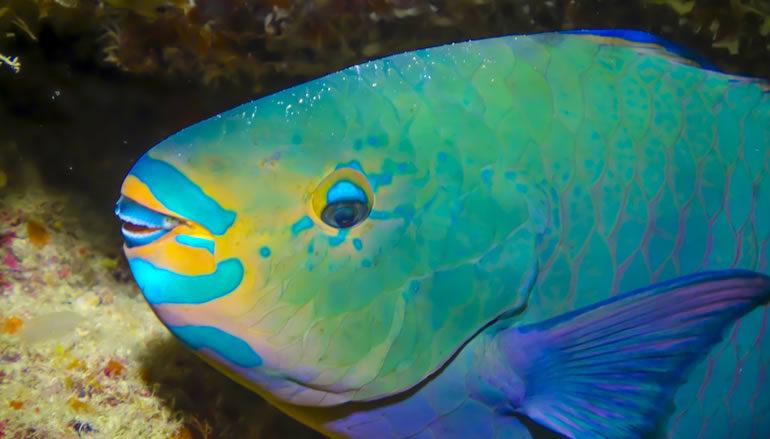Pescadores valoran medidas para protección del pez Loro y de trabajadores del mar
