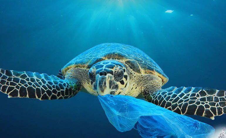 Los plásticos de un solo uso, prohibidos a partir de 2021