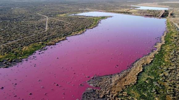 Una laguna rosada por la polución de industrias pesqueras en Argentina