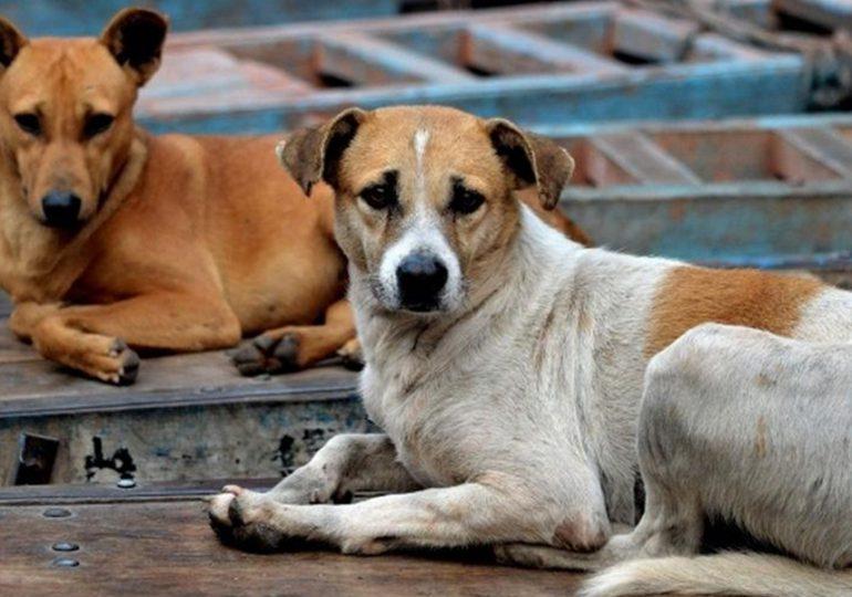 27 de julio, Día Internacional del Perro Callejero