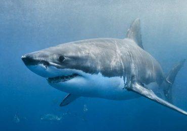 Un tiburón mata en Brasil a un bañista que había entrado al agua a orinar