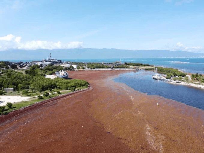 Jorge Mera anuncia plan de trabajo para retirar el sargazo en playas de Barahona