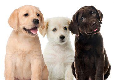 ¿Sabías que hoy 21 de julio, es el Día Mundial del Perro?