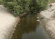 CEBAMDER valora  decisión de Medio Ambiente  de impedir ecocidio de  lagunas costeras en Manzanillo