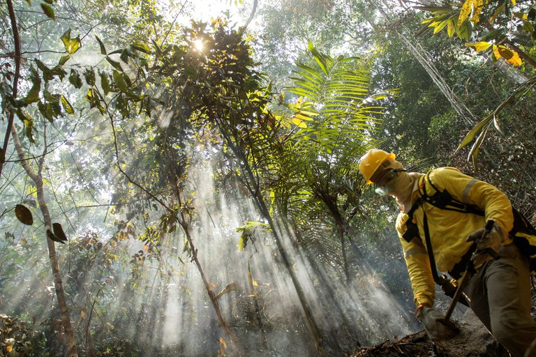 Bosques devastados: la deforestación en la Amazonía brasileña ya está cerca de llegar a niveles récord