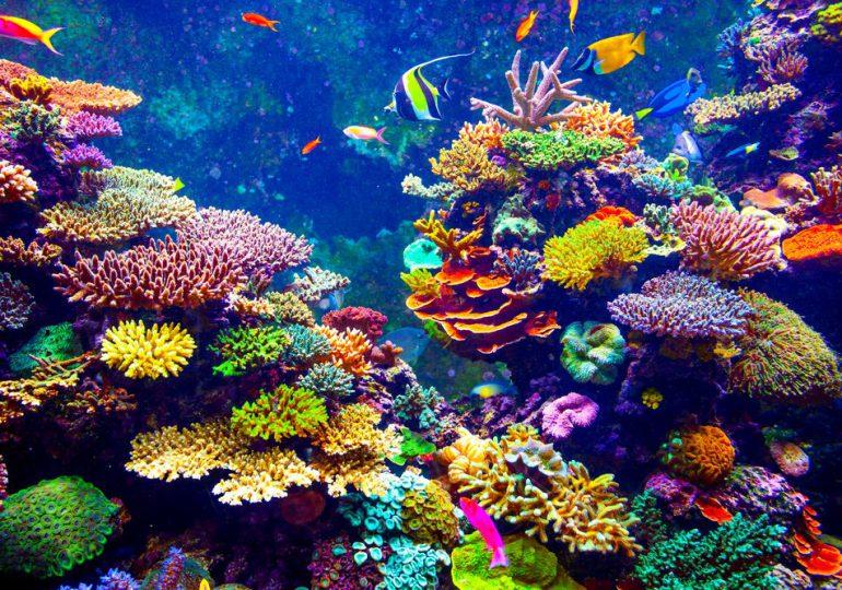 Tailandia prohíbe uso de protectores solares porque dañan arrecifes de coral