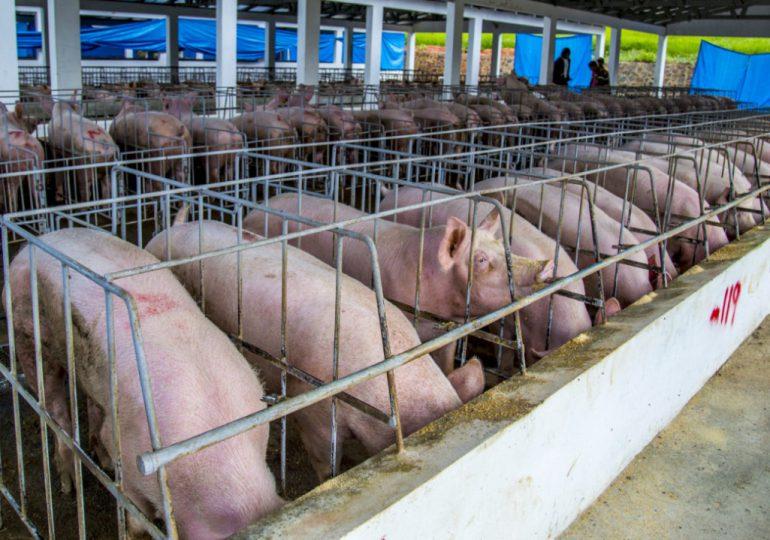 Se eleva a 15 las provincias afectadas por peste porcina africana