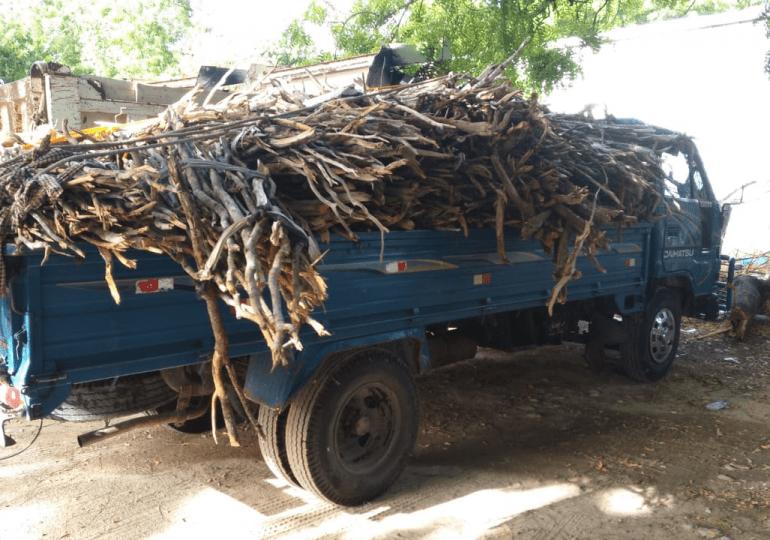 Tribunal de Pedernales sanciona a mujer por traficar con troncos de guaconejo