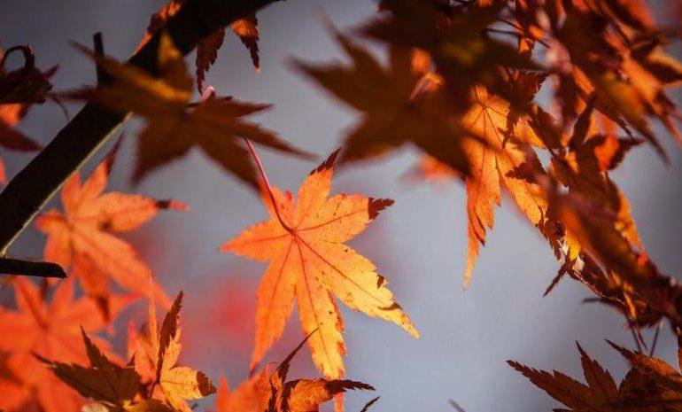 Equinoccio de Otoño: ¿por qué este año empieza el día 22 de septiembre?