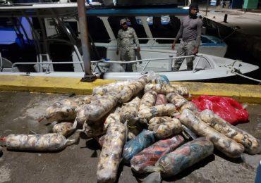 Autoridades incautan más de media tonelada de peces loros y lambies en Samaná durante operativo