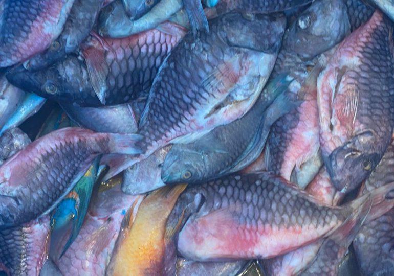 Medio Ambiente decomisa 1,732 libras de pescados y lambies en veda durante operativo simultáneo en seis provincias