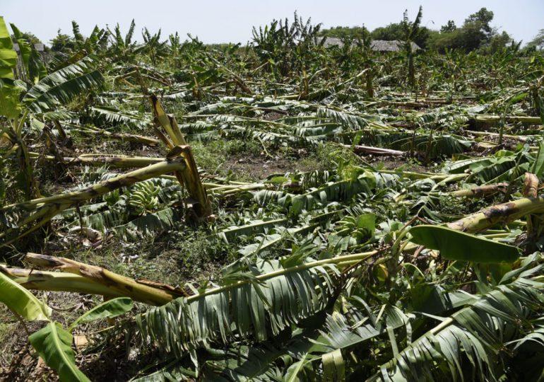 Gobierno acude en auxilio de agricultores plataneros afectados por tornado