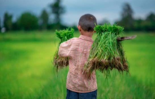 RD avanza en eliminación del trabajo infantil