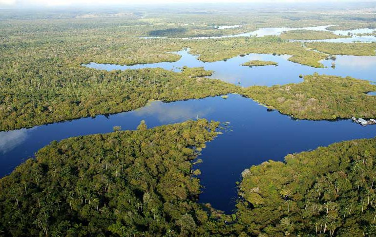 Revelan la Amazonía perdió área del tamaño de Chile