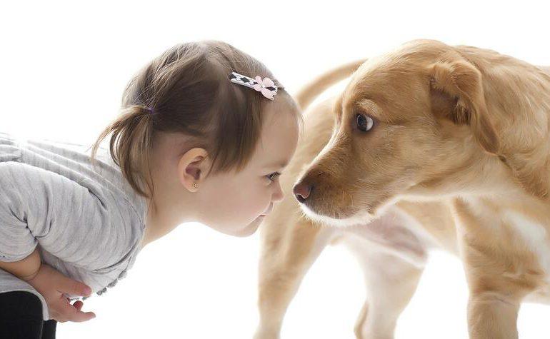 Por qué los cachorros tienen miedo y cómo ayudarlos