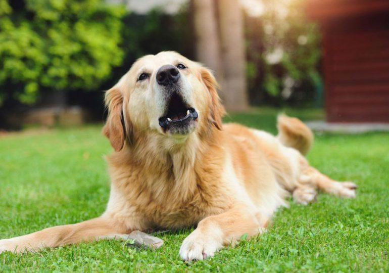¿Por qué los perros ladran sin parar?