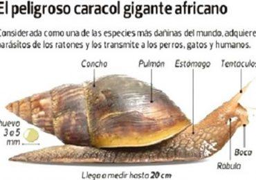 UASD organiza curso internacional sobre el caracol gigante africano