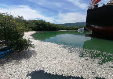VIDEO   Medio Ambiente investiga muerte de peces cerca de puerto El Cayo en Barahona