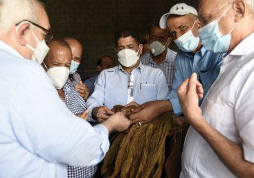 Gobierno impulsa cultivo de tabaco en la región Suroeste; inicia siembra de cuatro mil tareas