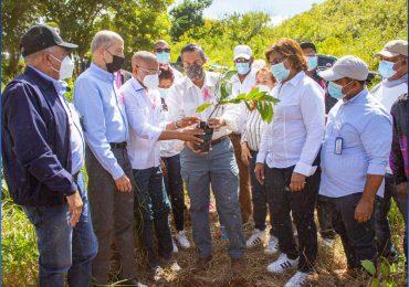 UTEPDA y Medio Ambiente realizan jornada de reforestación en Pedernales