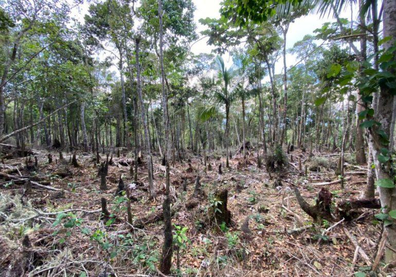 Somenten a ex alcalde de Barahona por tala de árboles en área protegida